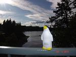 Pierre at Puget Sound