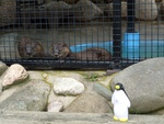 Pierre with Otters