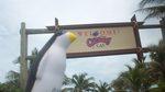 Pierre on Castaway Cay