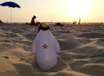 Pierre on the Beach