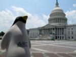 Pierre Visits Congress